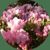 Rundel blommor